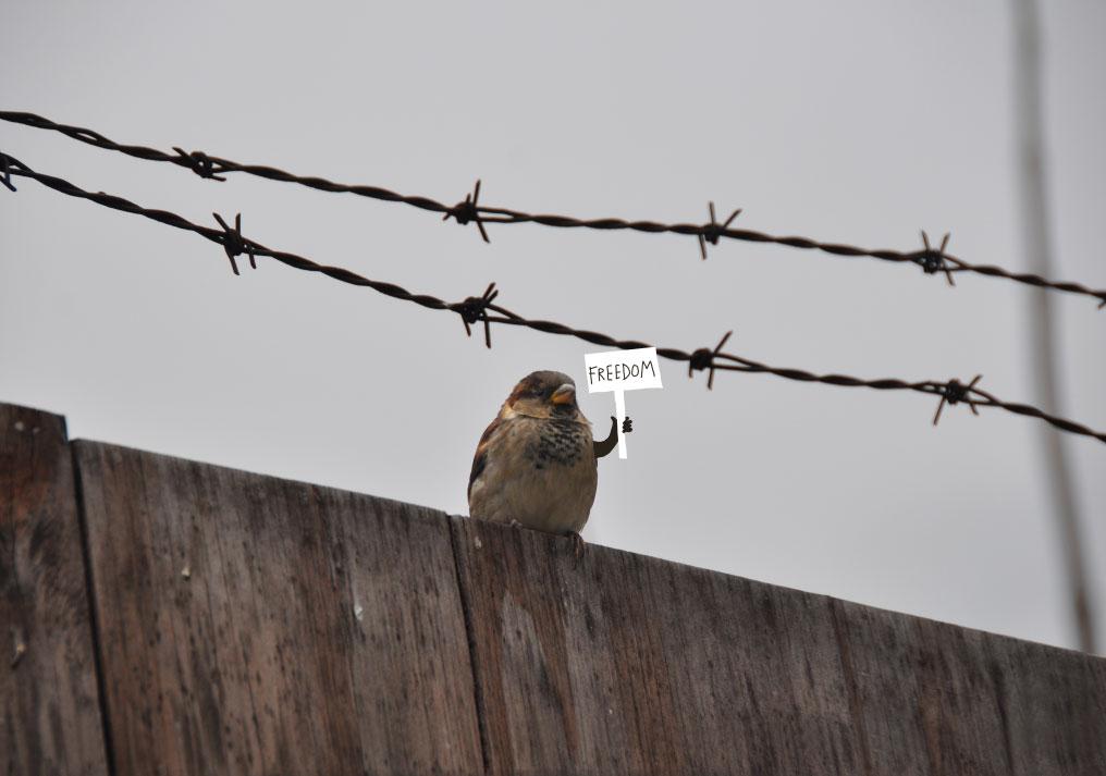 sandrine estrade boulet - freedom-sandrineboulet