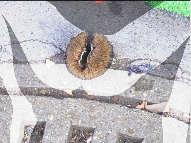 sandrine estrade boulet - Capture d'écran 2013-04-15 à 12.57.47